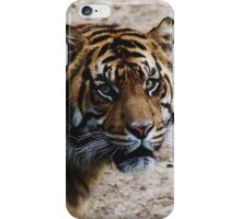 DC Tiger iPhone Case/Skin