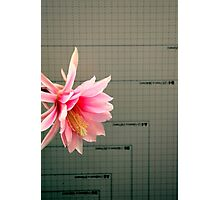 A Chart Topper Photographic Print