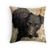 Fergus, Wire-Haired Patterdale Terrier Throw Pillow