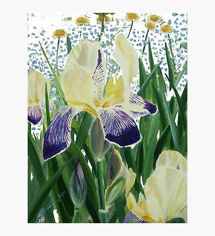 Gele Iris 2 Photographic Print