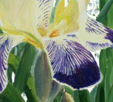 Gele Iris 2 Sticker