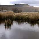 Whernside by mikebov