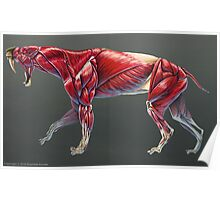 Smilodon Populator Muscle Study No Labels Poster