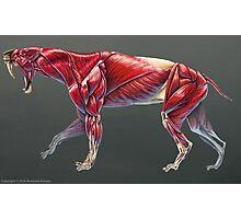 Smilodon Populator Muscle Study No Labels Photographic Print