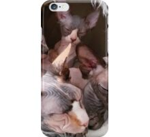 sphynx tortie bicolor black sleeping iPhone Case/Skin