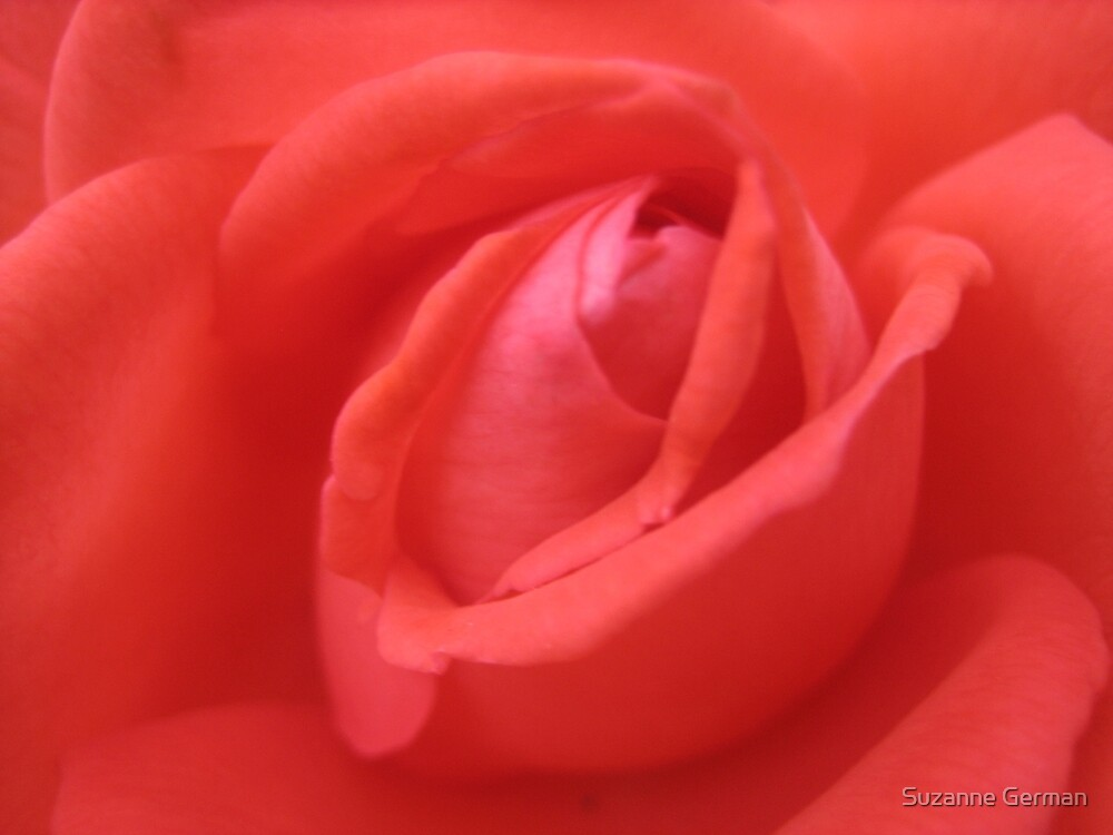 Rose  by Suzanne German