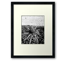 Thistle - black & white Framed Print