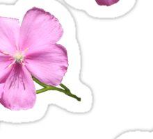 Pink Wildflower Sticker