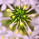 Floral Fireworks by alan shapiro