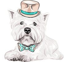 dog West Highland White Terrier Photographic Print