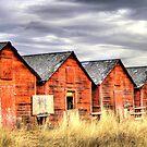 Four Red Barns.............. by PrairieRose