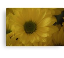Just One Yellow Daisy Canvas Print