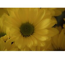 Just One Yellow Daisy Photographic Print