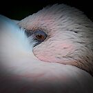 Beautiful Flamingo by Dennis Stewart