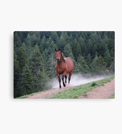 Sir Conan - Rescue Horse Canvas Print