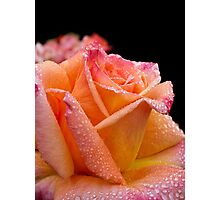 A glowing rose on a rainy morning Photographic Print
