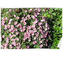 Beautiful spring bush with pink flowers. Poster