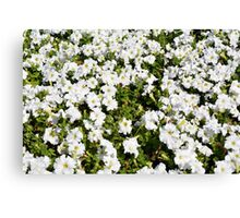 Beautiful pattern with white flowers in the garden. Canvas Print