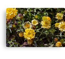 Yellow flowers in the garden. Canvas Print