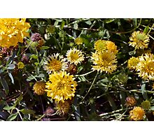 Yellow flowers in the garden. Photographic Print