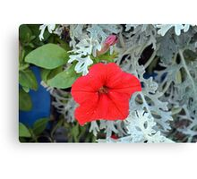 Macro on beautiful red flower in the garden. Canvas Print