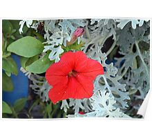 Macro on beautiful red flower in the garden. Poster