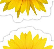 Two Sunflowers Sticker