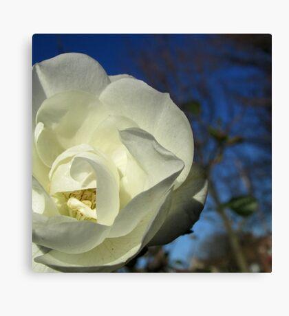 Little White Flower Canvas Print