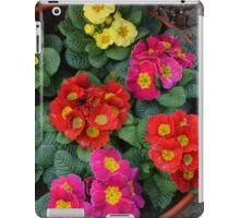 Multi Colored Polyanthus iPad Case/Skin