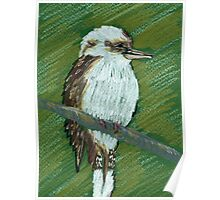 kookaburra art Poster