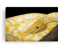 Yellow Snake Canvas Print