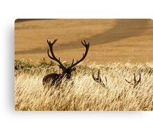 Red Deer Stags (Cervus elaphus) Canvas Print