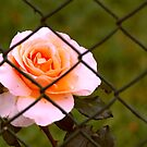 Fenced In - NSW by CasPhotography