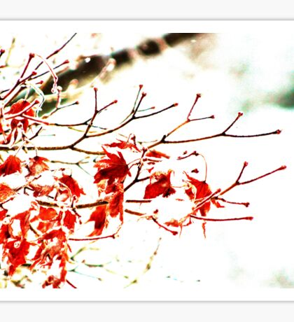 Snowy Maple Abstract Sticker