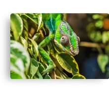 Exotic Reptile Canvas Print