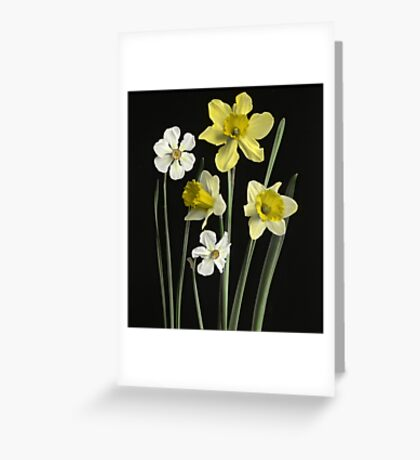 Narcissi of several kinds, Daffodils, Poet's Nar  Greeting Card