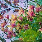 Dreaming Of Magnolias by John Rivera
