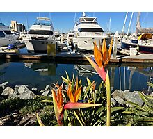 US - California - San Diego - Marina & Birds of Paradise Photographic Print