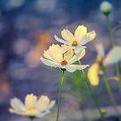 Garden Romance by John Rivera