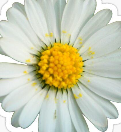 White daisy Sticker