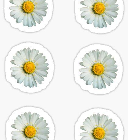 Six white daisies Sticker