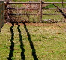 Fence, Shadow's, Tree. Sticker