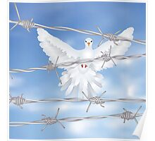 Dove and Barbed Wire Poster