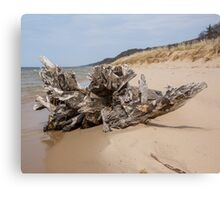 Driftwood in West Michigan Canvas Print