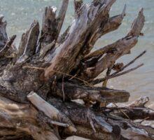 Driftwood Roots Sticker