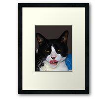 HUNGRY TUXEDO CAT Framed Print