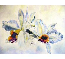 Orchid Waltz Photographic Print