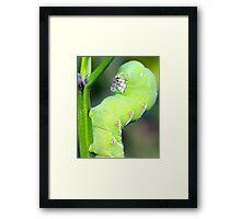 GREEN GLORIOUS CATERPILLAR Framed Print
