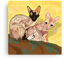 Tiger and George - the Cornish Rex Cats Canvas Print