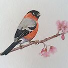 Bullfinch by Val Spayne